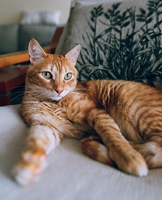 gato-inicio-dermissana